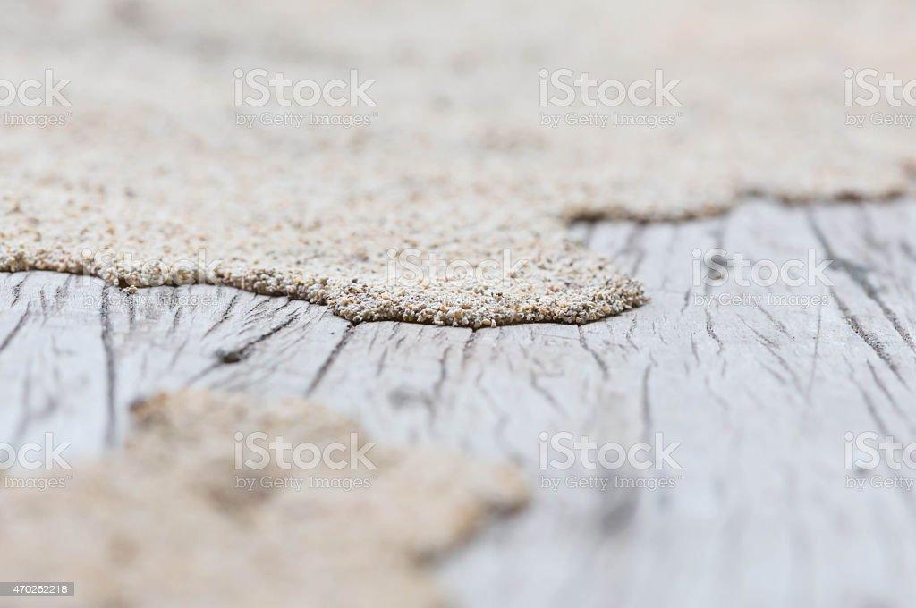 termite stock photo