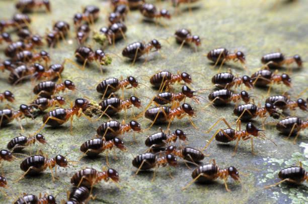 termiet. - termietenheuvel stockfoto's en -beelden