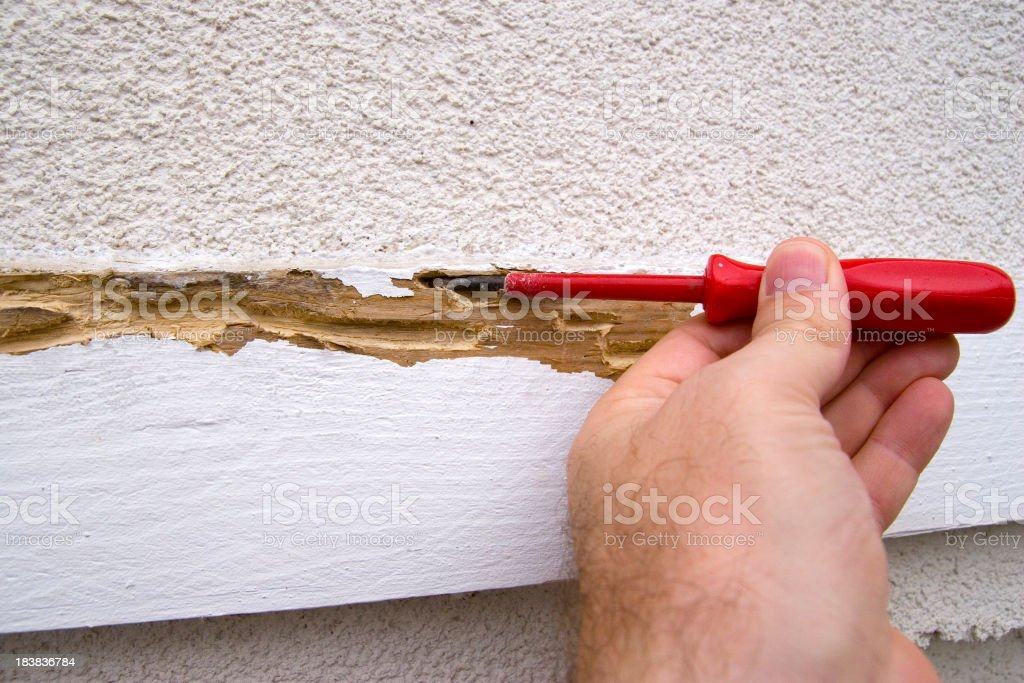 Termite Problems stock photo