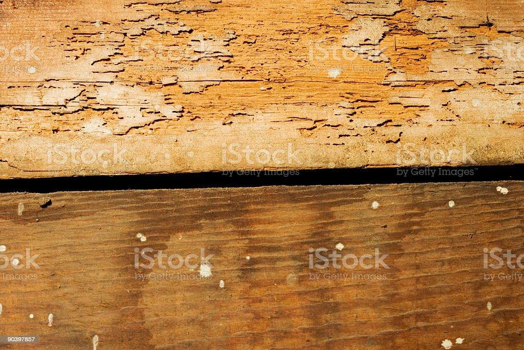 Termite problems royalty-free stock photo