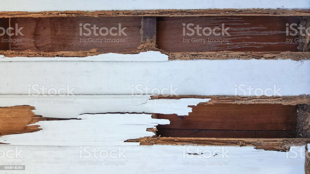 termite wall damage texture background stock photo