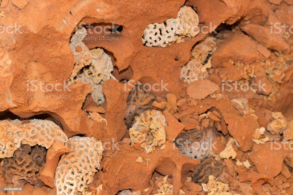 Termiten Schäden Nach Hause Makro Schließen Sich Termiten In ...
