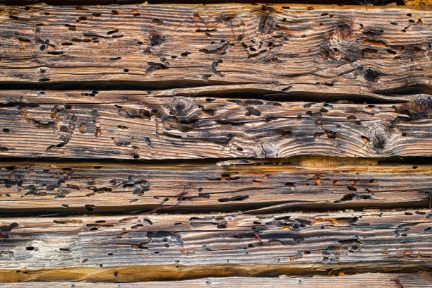 Termites eat old and decayed wooden planks Termites eat old and decayed wooden planks termite stock pictures, royalty-free photos & images