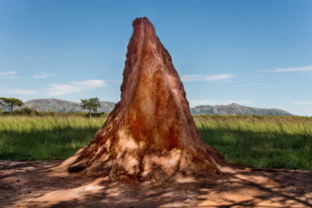 Termites Mound Termites Mound on the Savana, Swaziland, Africa. isoptera stock pictures, royalty-free photos & images