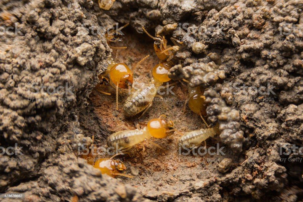 Termites nesting stock photo