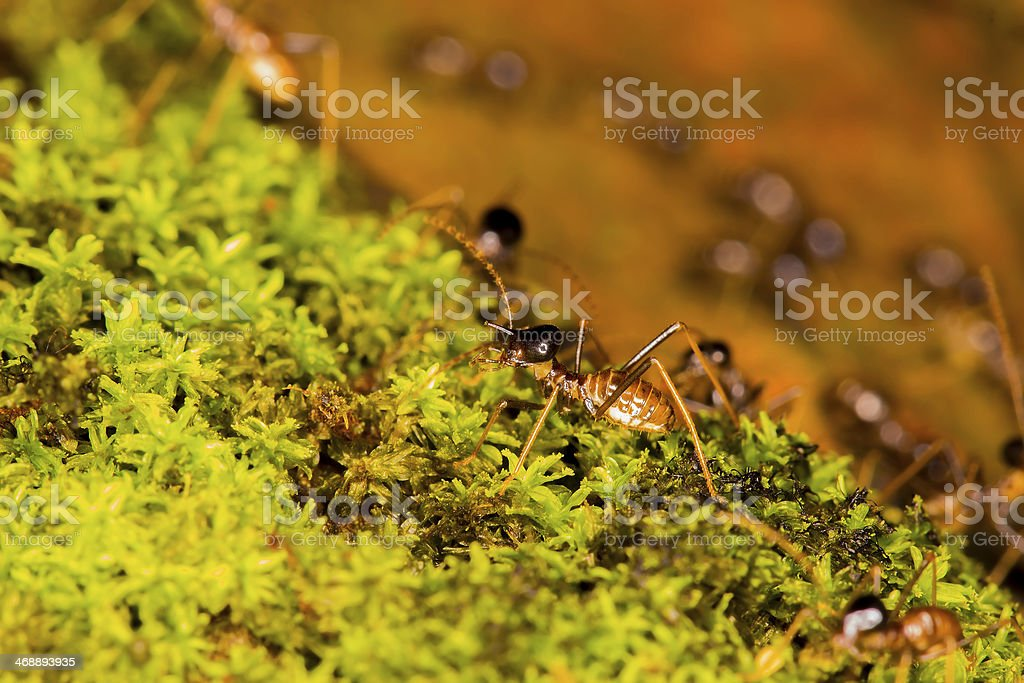 termites on green moss royalty-free stock photo