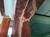 Close up of Termites
