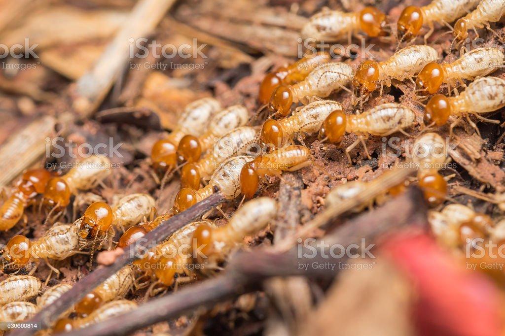 termites stock photo