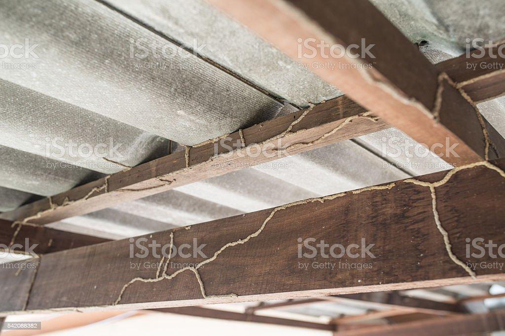 termites problem stock photo
