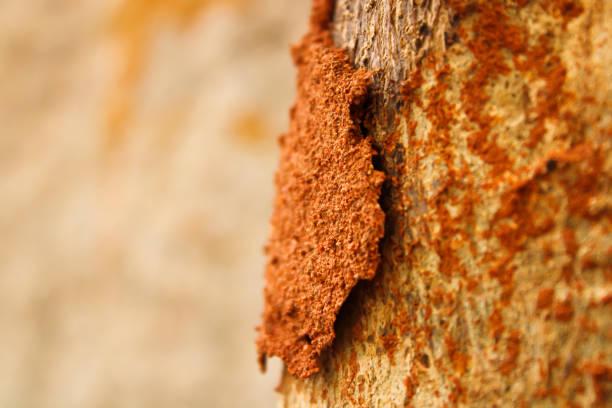 termieten met hout en bodemtextuur - termietenheuvel stockfoto's en -beelden