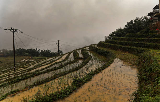 Terrace rice cultivation in Muong Hoa Valley