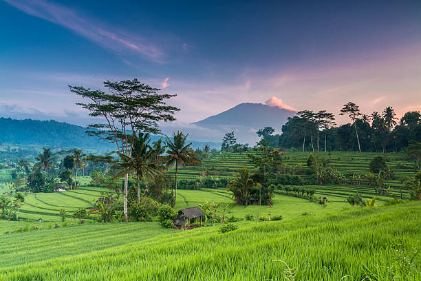 terrace rice field in bali in indonesia - terras veld stockfoto's en -beelden