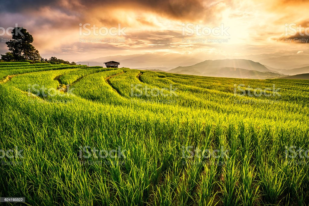 Terrace Rice field in Chiang Mai, Thailand stock photo