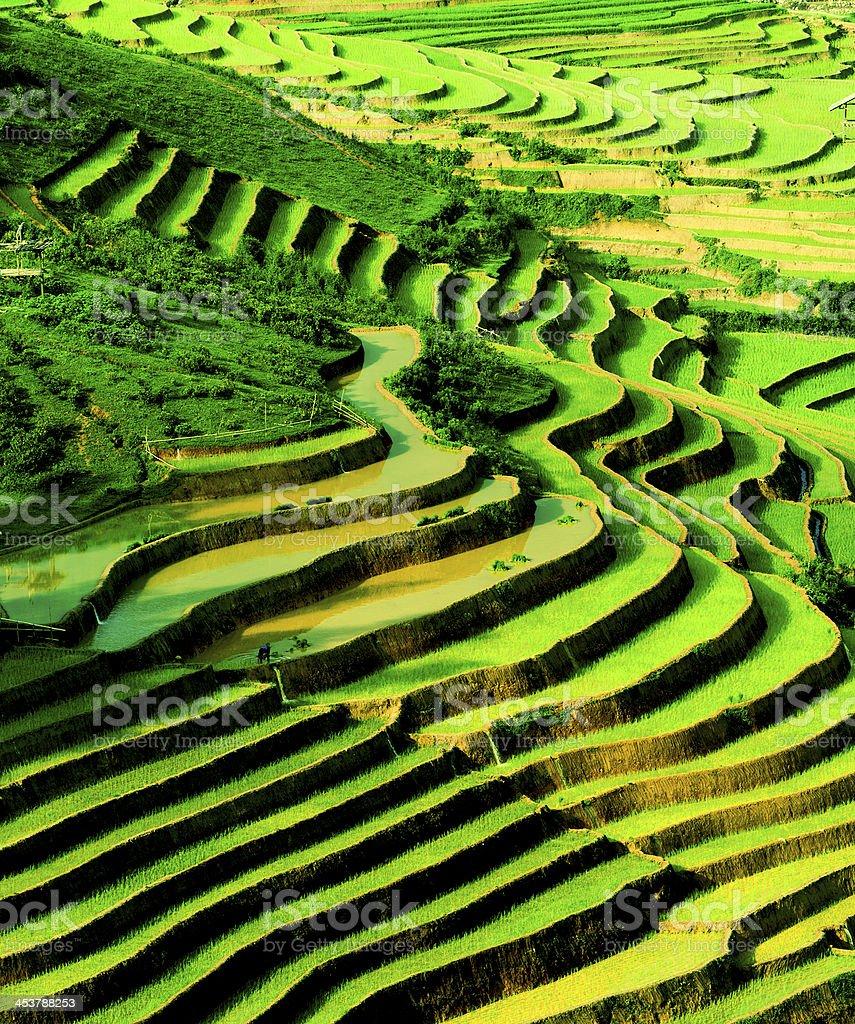 Terrace rice field in Northwest Vietnam stock photo