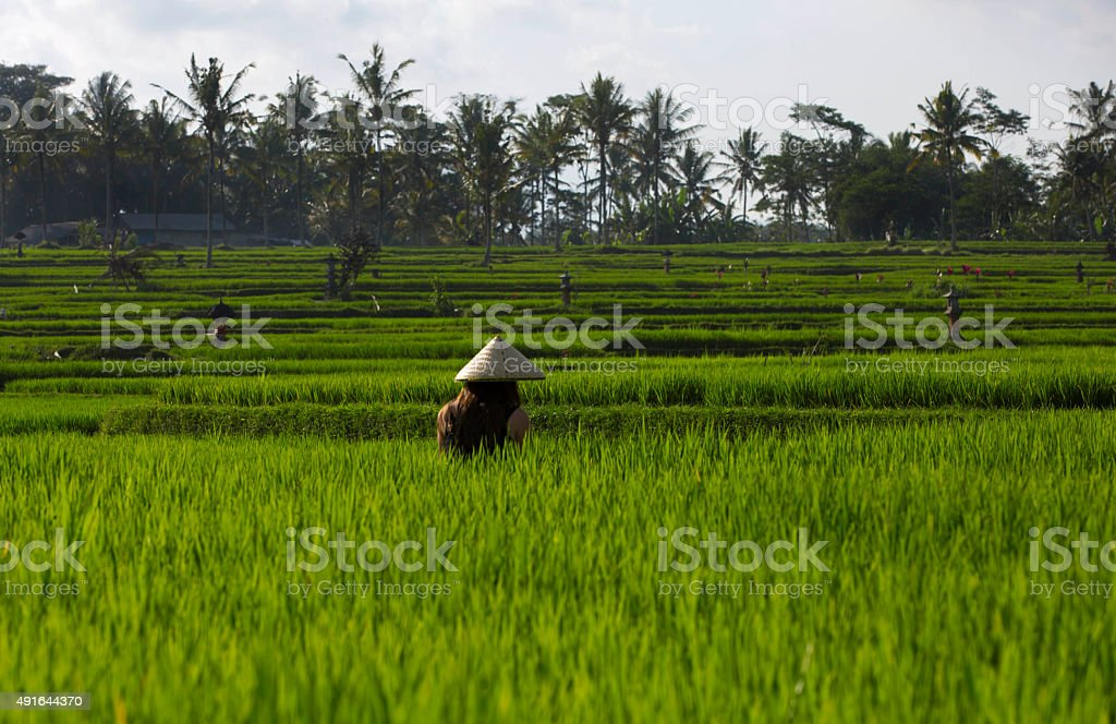 Terrace Rice Fields and Bali Lady stock photo