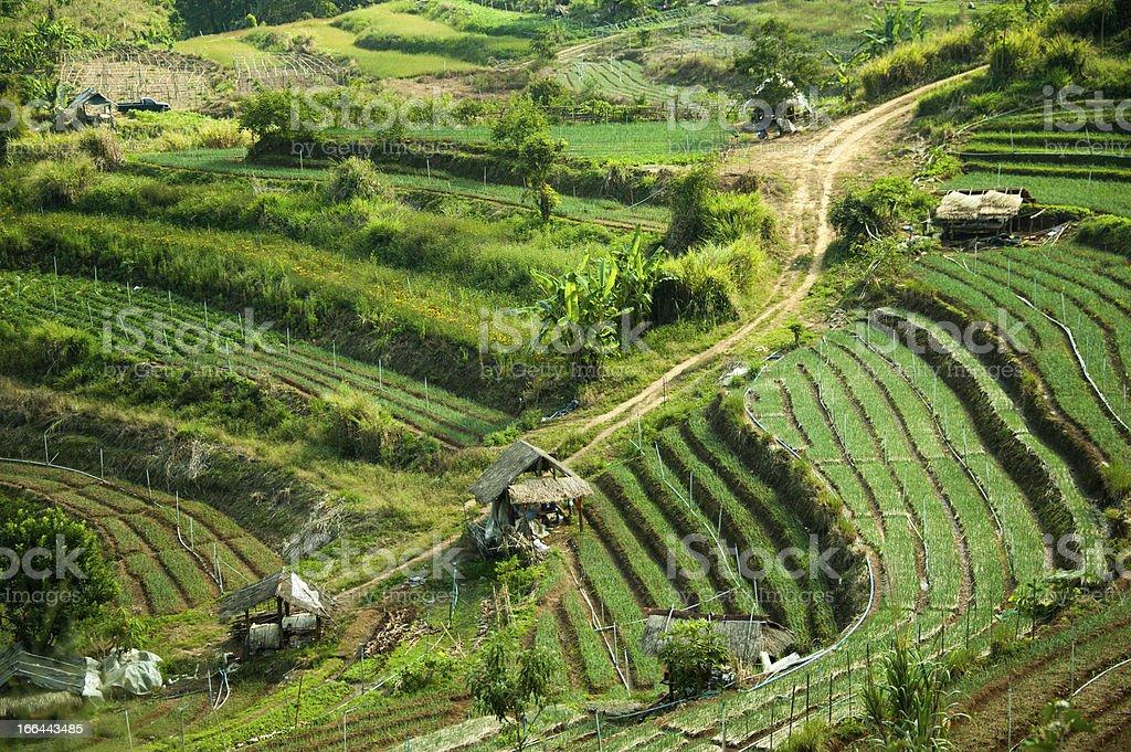 Terraced Farming royalty-free stock photo
