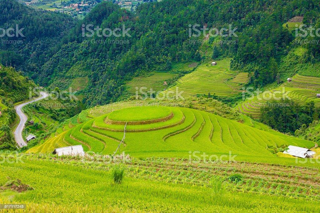 Terraced field in Mu Cang Chai district - Vietnam stock photo
