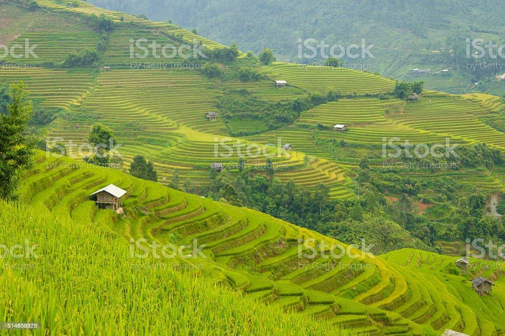 Terraced field in Mu Cang Chai province - Vietnam stock photo
