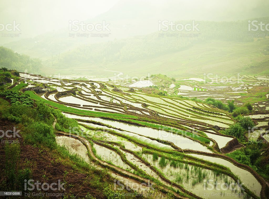 Terraced Field royalty-free stock photo