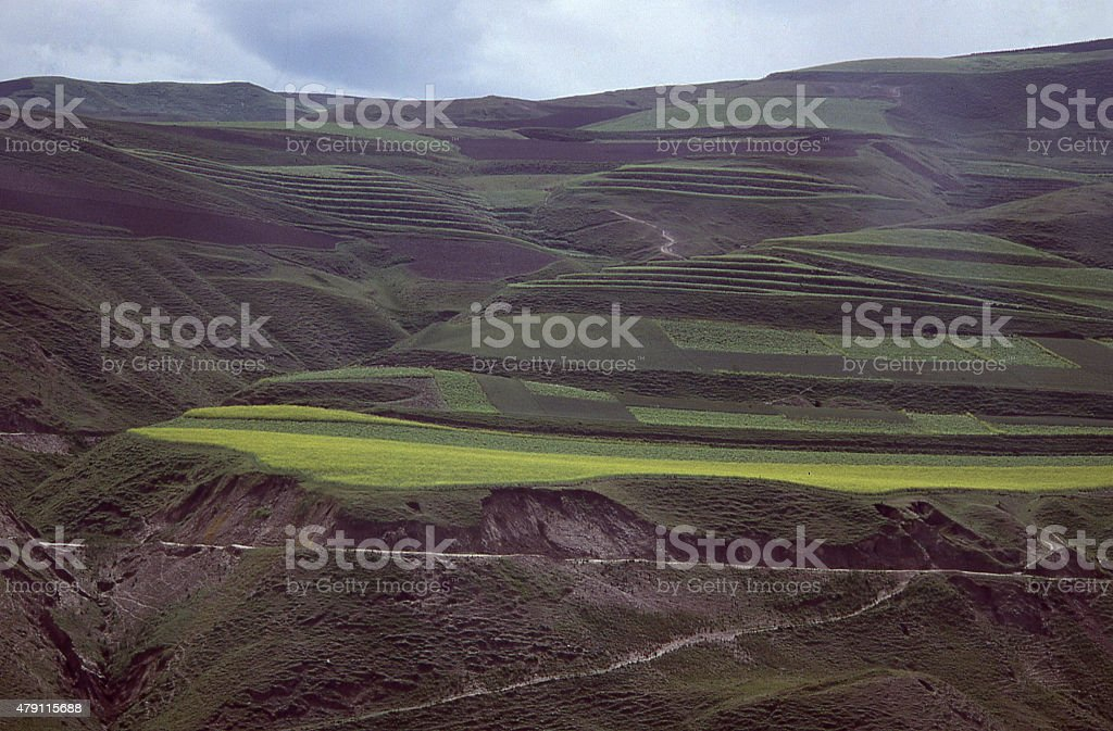 Terraced fields and spring mustard crops Loess Plateau China stock photo