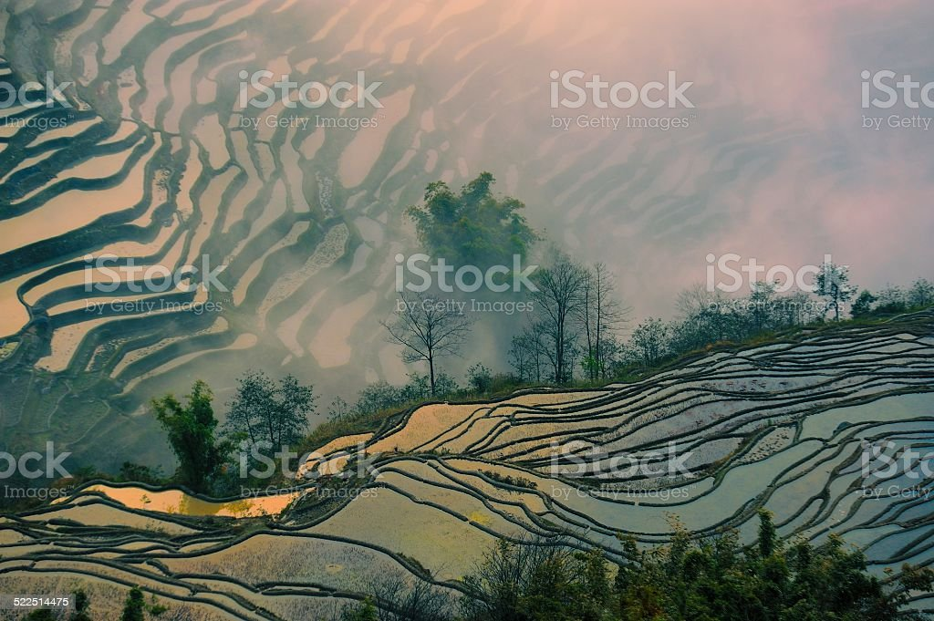 terraced fields in the setting sun stock photo