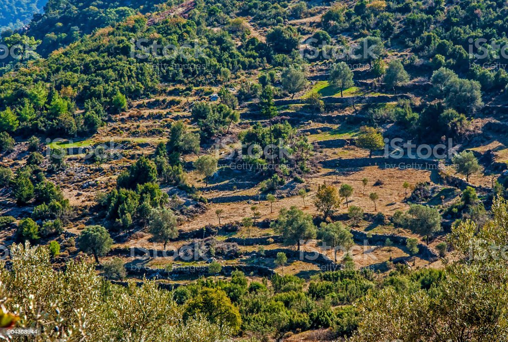 Campos terraced Mugla, Turquia - Foto de stock de Agricultura royalty-free