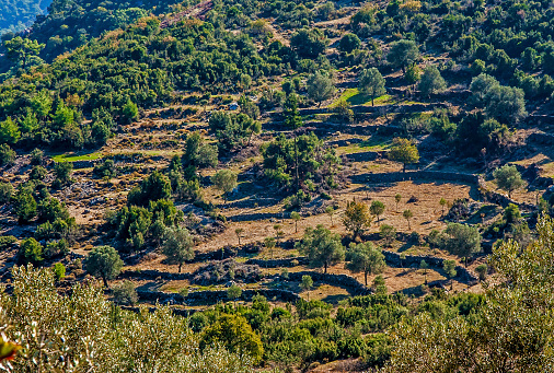 Foto de Campos Terraced Mugla Turquia e mais fotos de stock de Agricultura