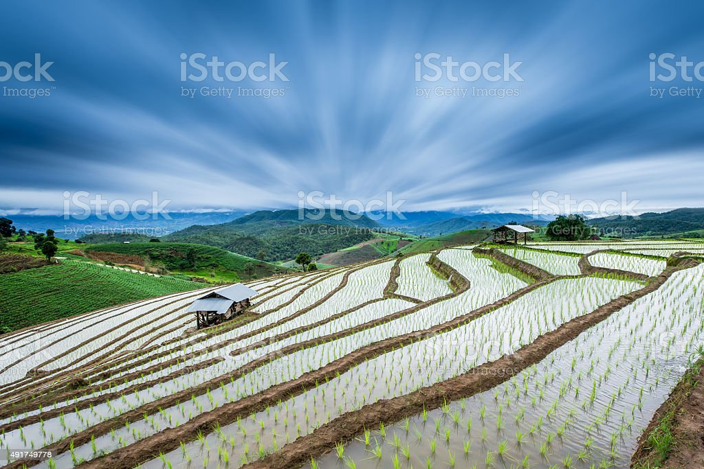 Terraced Paddy Field in Mae-Jam Village , Chaing mai Province royalty-free stock photo