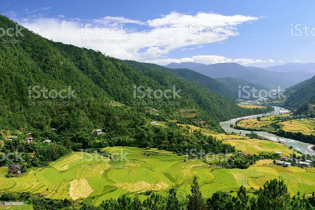 Terraced paddy fields in the Punakha valley, Bhutan stock photo