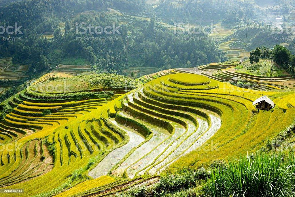 Terraced paddy fields stock photo