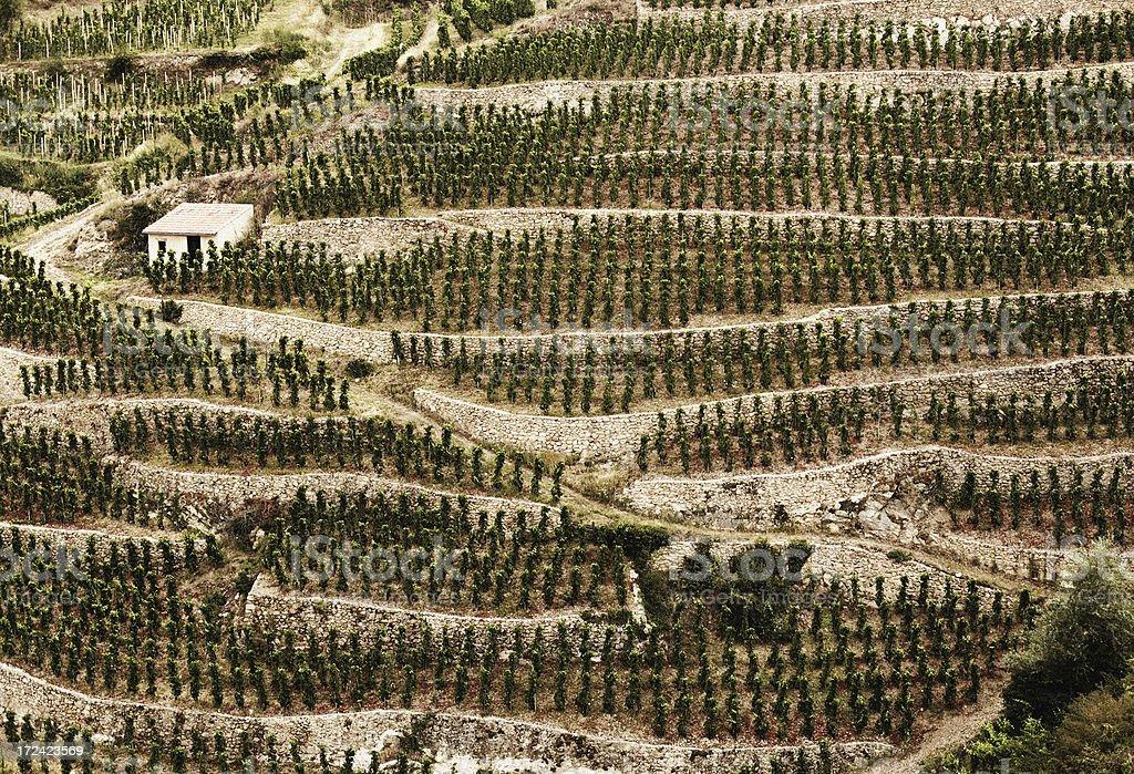 Terraced Rhône Valley Vineyard royalty-free stock photo