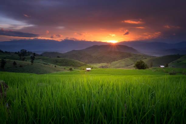 terraced rice field in chiang mai - burma home do zdjęcia i obrazy z banku zdjęć
