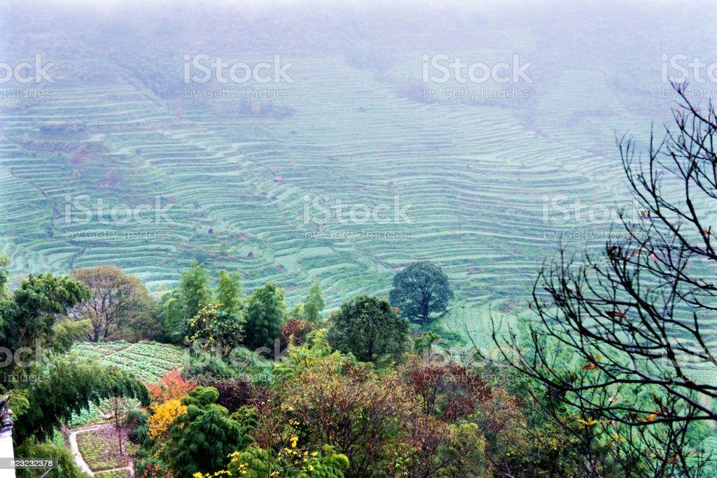 Campo De Terrazas De Arroz En China Foto De Stock Y Más