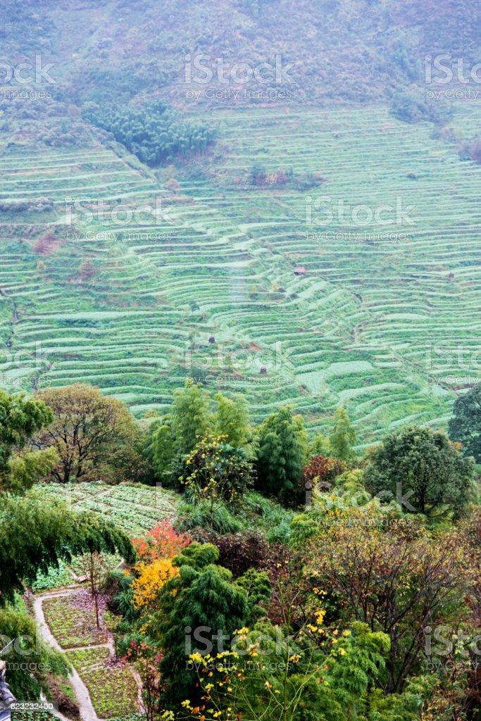 Campo De Terrazas De Arroz En China Foto De Stock Y Más Banco De Imágenes De Agricultura