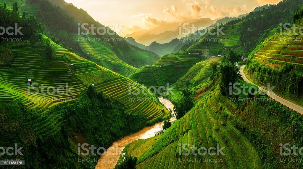 Terraced rice field in Mu Cang Chai, Vietnam royalty-free stock photo