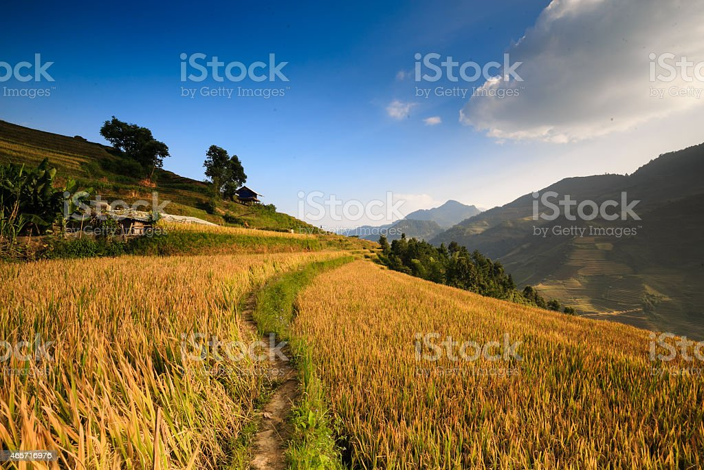 Terraced rice field in North of vietnam stock photo