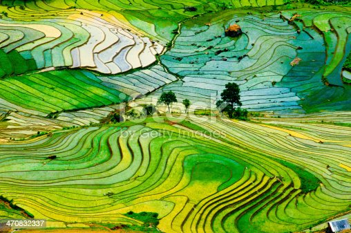 istock Terraced rice field in Vietnam 470832337