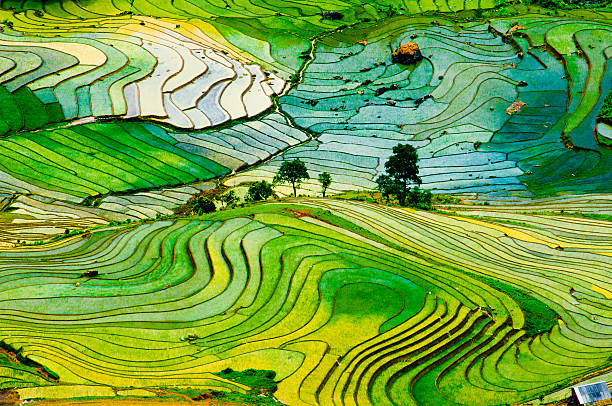 terraced rice field in vietnam - terras veld stockfoto's en -beelden