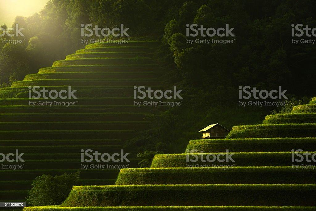 Terraced rice field of Mu Cang Chai, Yenbai, Vietnam stock photo