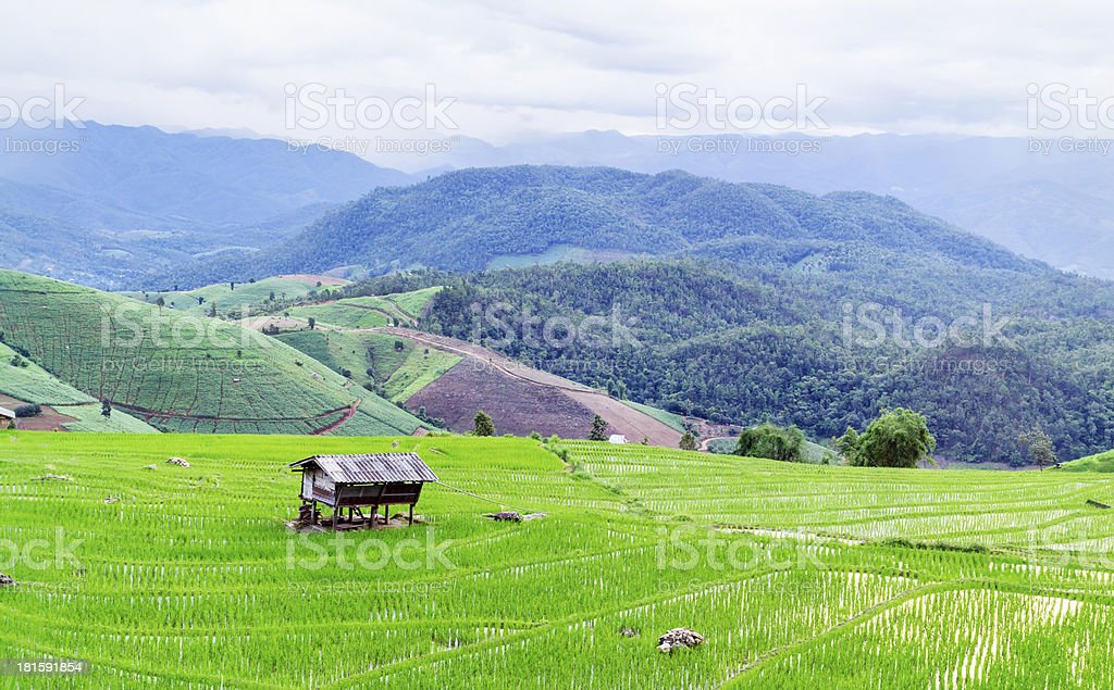 Terraced rice fields hill in Mae chaem royalty-free stock photo