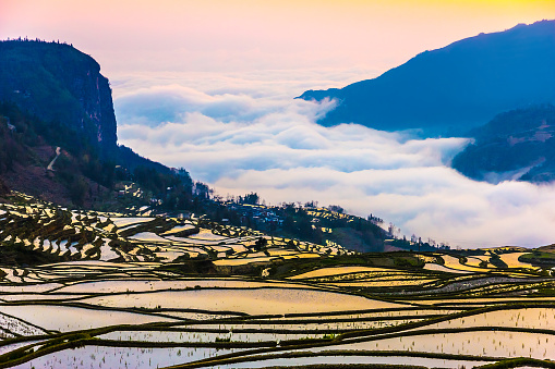 Terraced Rice Fields in Water Season South China at Sunset