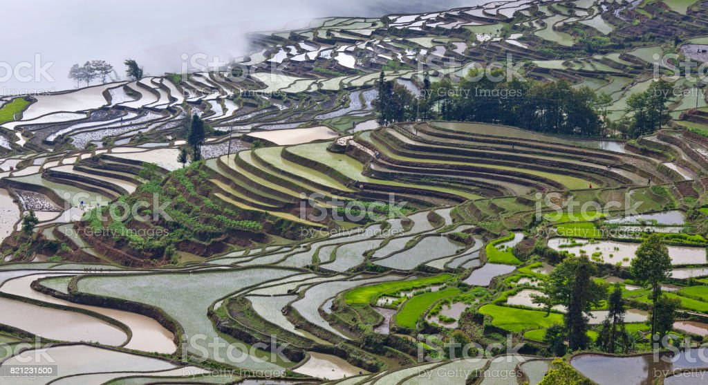 Terraced rice fields in Yuanyang county, Yunnan, China stock photo