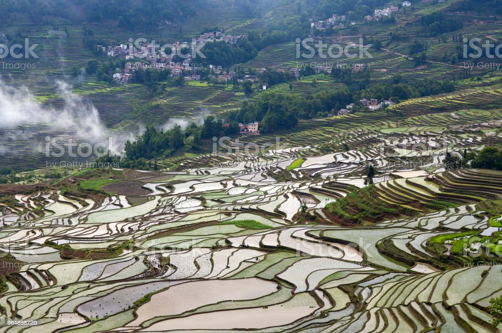 Terraced rice fields in Yuanyang county, Yunnan, China royalty-free stock photo
