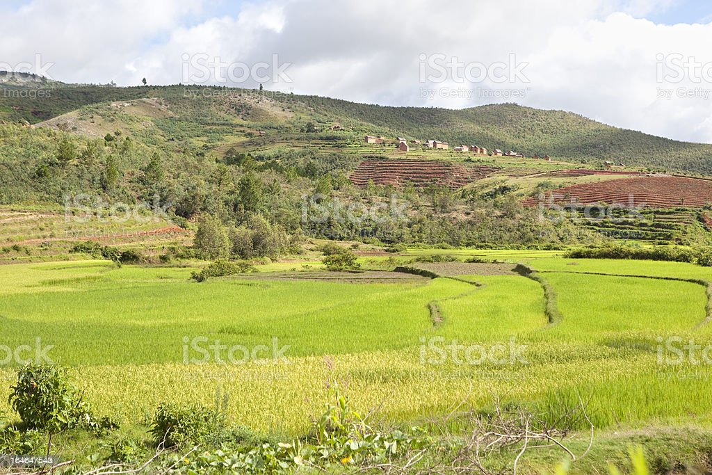 Terraced Rice Fields Madagascar royalty-free stock photo