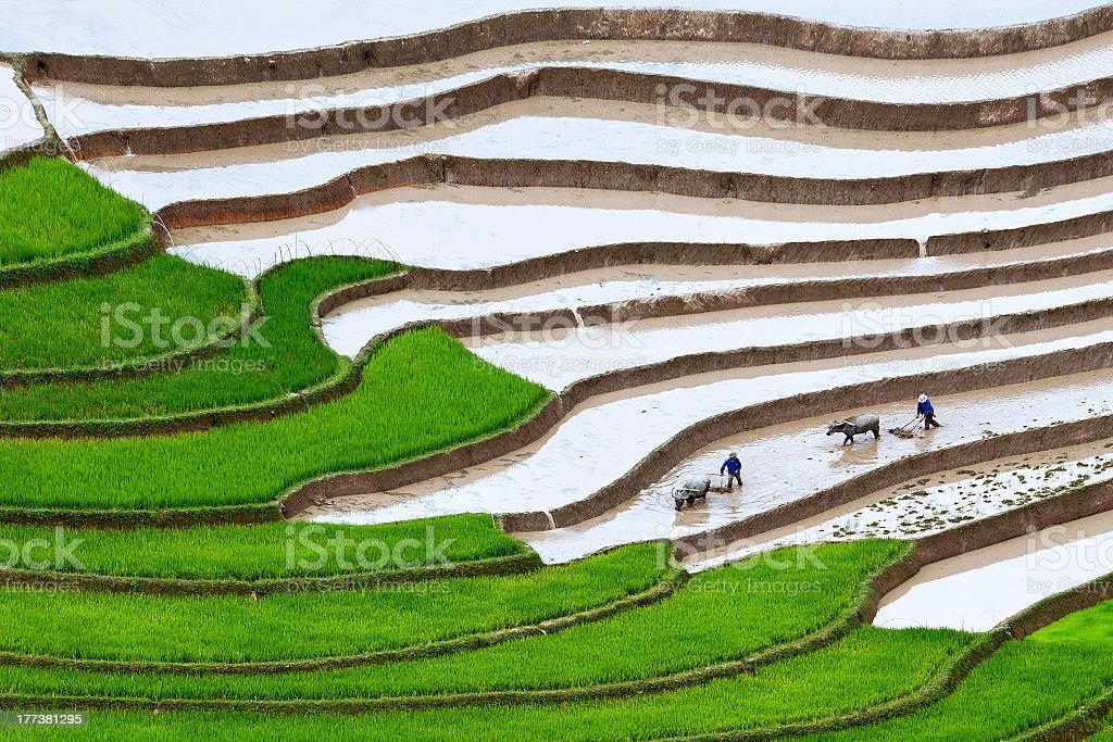 Terraced rice fields stock photo