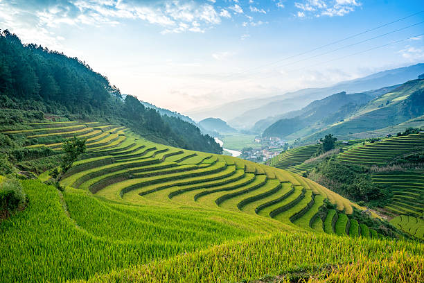 terraced rice fields - terras veld stockfoto's en -beelden