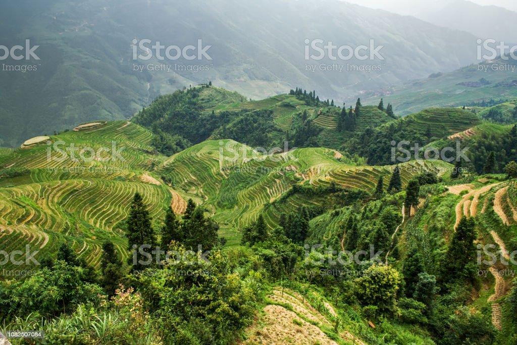 Campo De Arroz De Terrazas De Arroz En Longsheng County