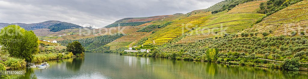 Terraced vineyards and olive groves along the Douro River. stock photo