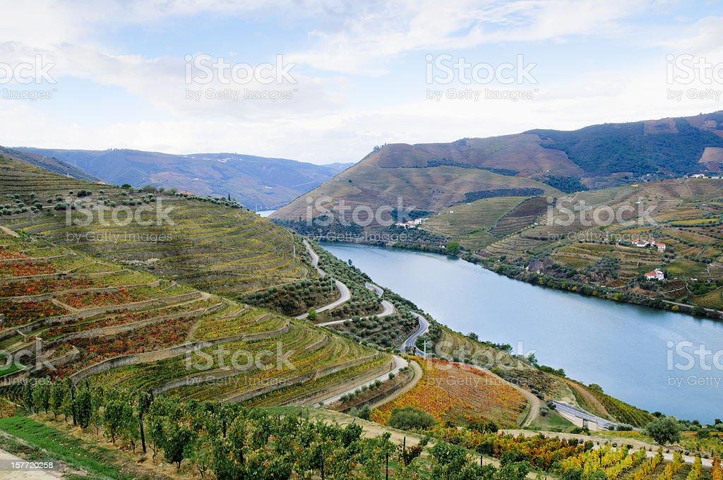 Terraced vineyards in autumn stock photo