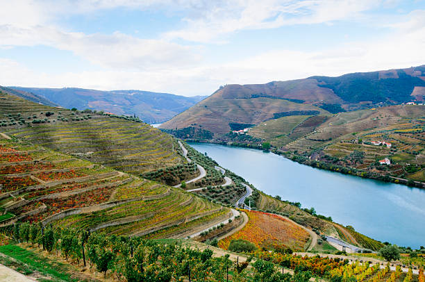 Terraced vineyards in autumn Terraced vineyards in autumn in the Douro Valley along the Douro River in Portugal. duero stock pictures, royalty-free photos & images